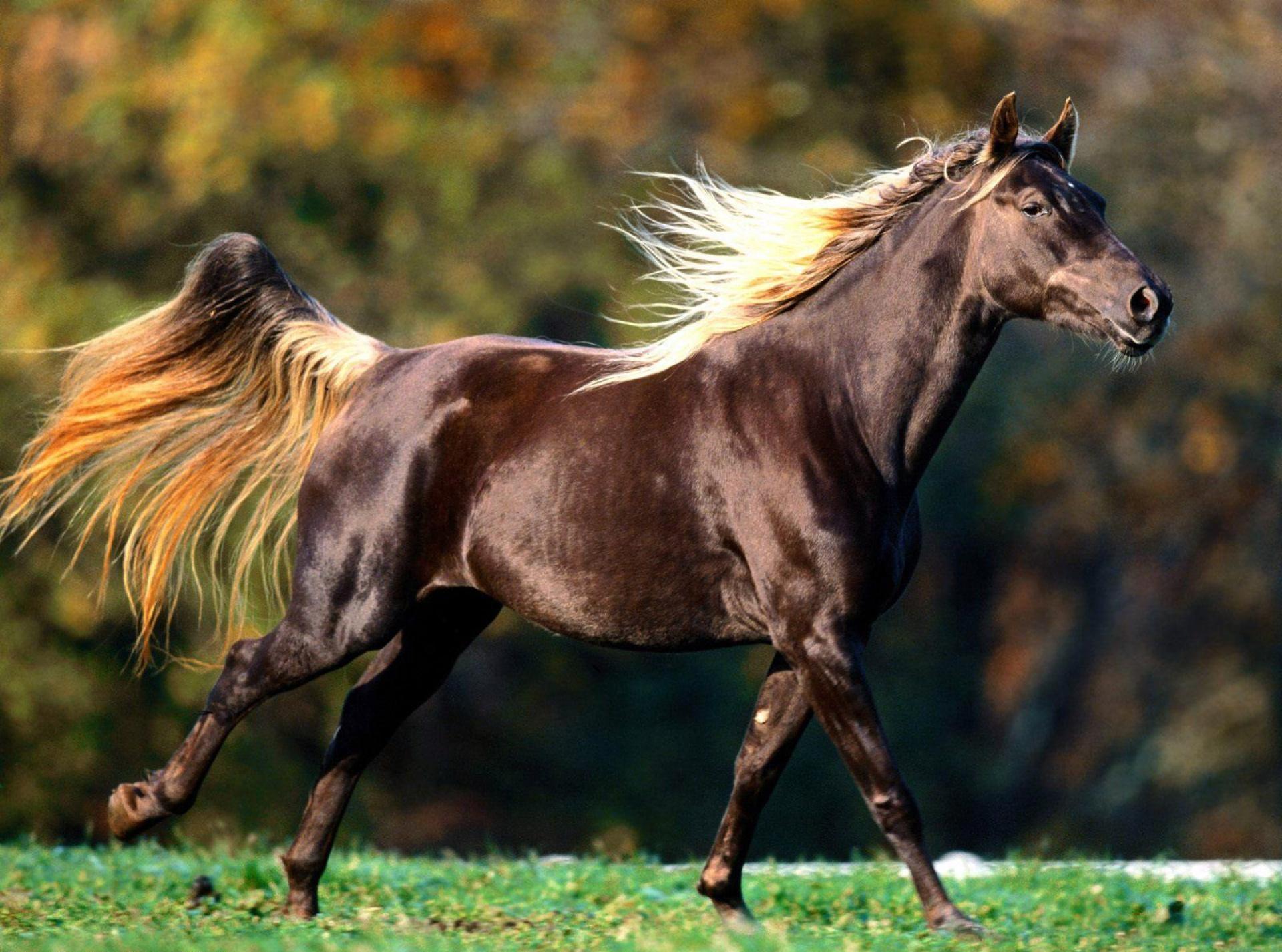 аукцион лошадей
